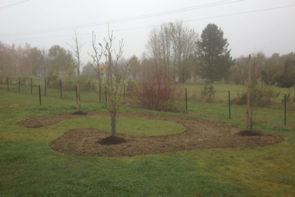 Plantation arbuste et massif