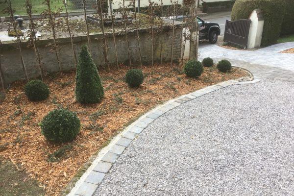 Plantations d'arbres 2020